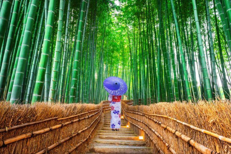 Kyoto Sagano Bamboo Forest